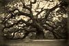 Angel Oak, Charleston