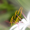 Soft Focus Flower2
