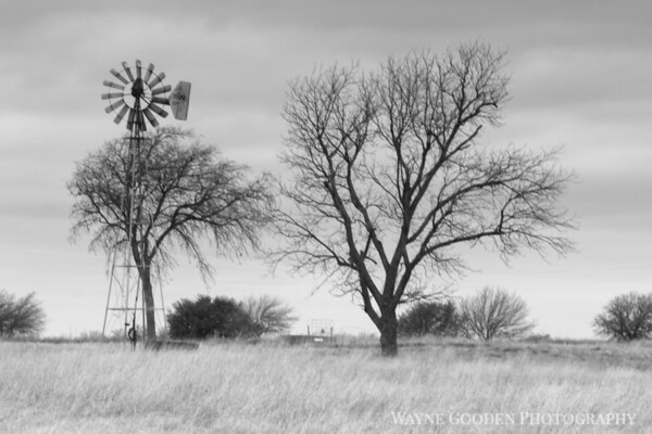 Pilot Point Windmill and Trees