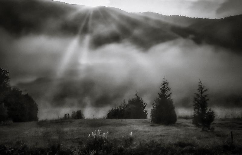 Mist in Morning