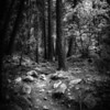 Path in Woods, Black and White