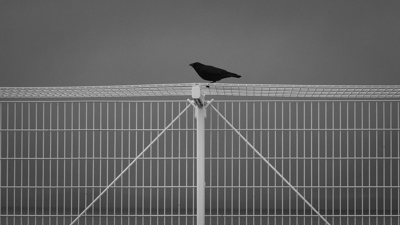 Outside the cage | Seattle, WA | November 2017