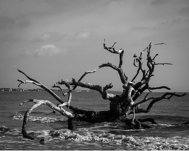 Driftwood Beach in Black and White