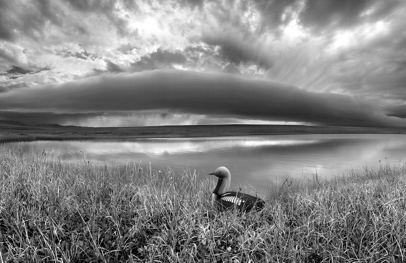 Storm clouds approach the nest of a Pacific Loon,  near the Turner River in the Arctic National Wildlife Refuge. July, 2010.