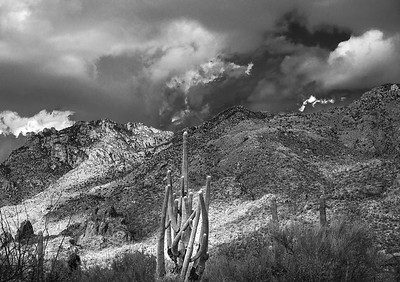 'Winter Pose in Black & White,' Catalina Mountains, Tucson, AZ  2021