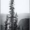 Tree Spires Colorado