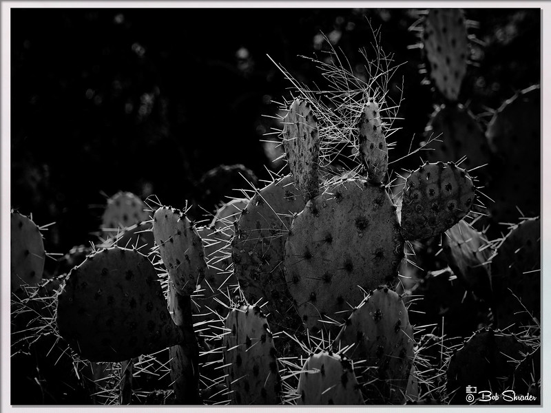 Thorny Questions
