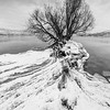 Winter Willow B+W