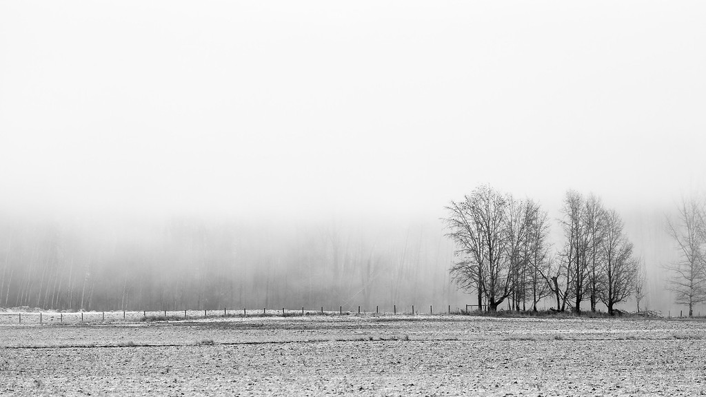 Winter Fog