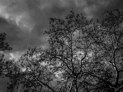 Darkness Arrives
