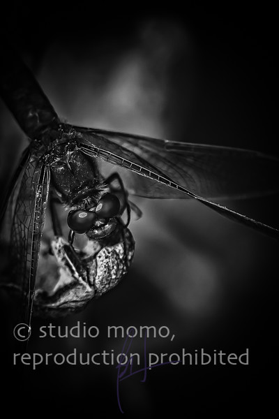 dragonfly ix