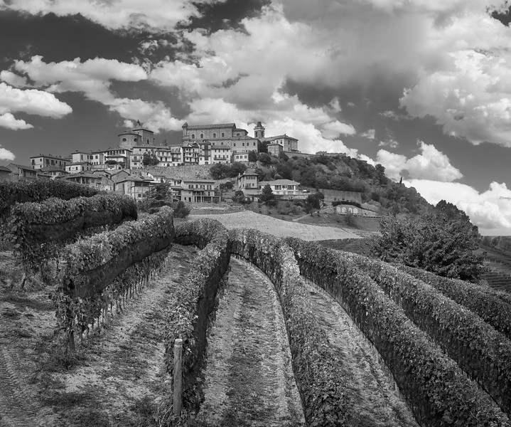 Vineyards near the 13th Century town of La Morra in the Langhe Hills, Barolo area of Piedmont region of northern Italy