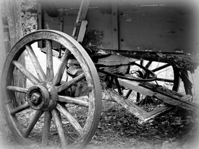 Old wagon on plantation