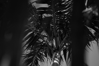 shaded by palms