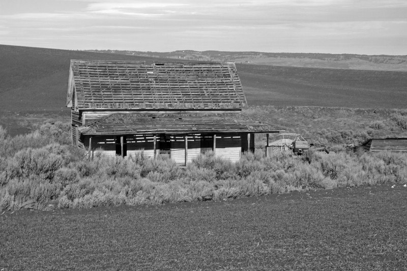 Abandoned farm house surrounded by sagebrush.