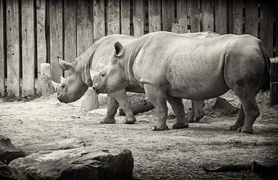Cleveland Zoo 6-18-2013 (273) sepia