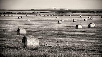 Montana 2014 (195)-300