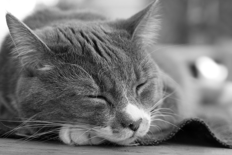 Sleepy cat