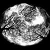 Terre à terre, Concours Photo de Louvain la Neuve - F100, Fisheye Dx et Ilford HP5