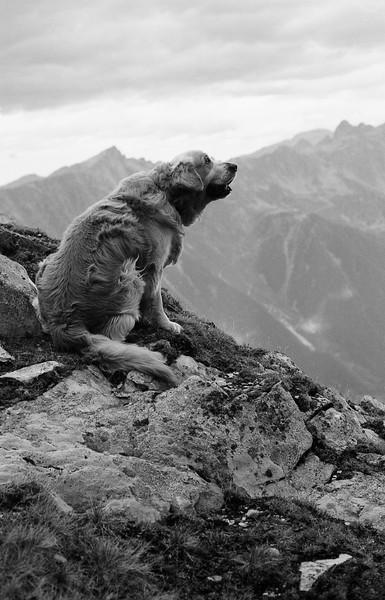 Joy dans les Alpes - F100, 50mm et Ilford XP2