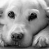 Le chien de Krô - F100, 70-200 VR et Néopan 400