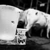 Fé-lait...- F100, 24mm et Tmax100