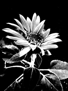 Backyard 046-1-bw