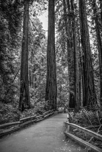 Path of Serenity