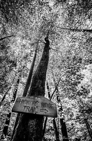 Hickory Ridge Trail