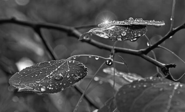 Early morning dew, Minnesota Arboretum, #0456