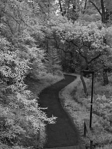 """UCSC Path at Dusk, Selected """"Favorite"""" of UCSC Chancellor's Photography Contest of 2012"""