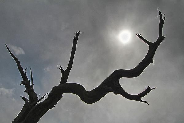 Dead tree - live sun in Navajo Monument Park, Arizona