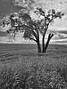 1589-Washington-Tree