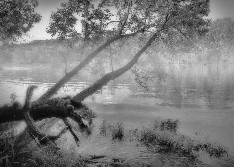 Morning Fog #1658