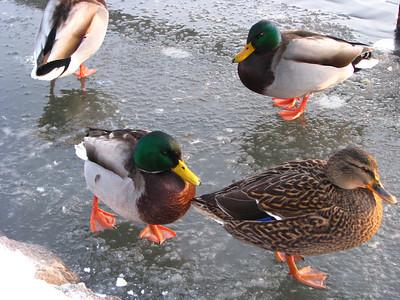 West park winter 19.12.2010