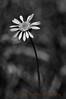 Bog's Bloom