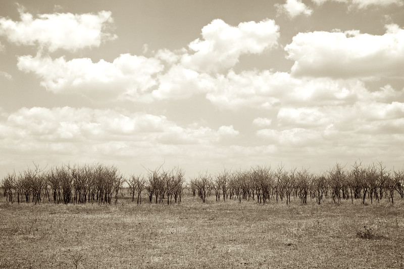Early spring on the savannah