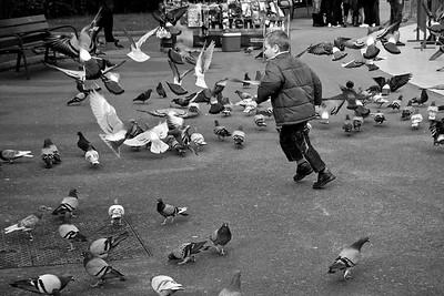 Chasing pigeons - Placa Catalunya
