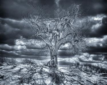 White Sands National Monument Devil Tree