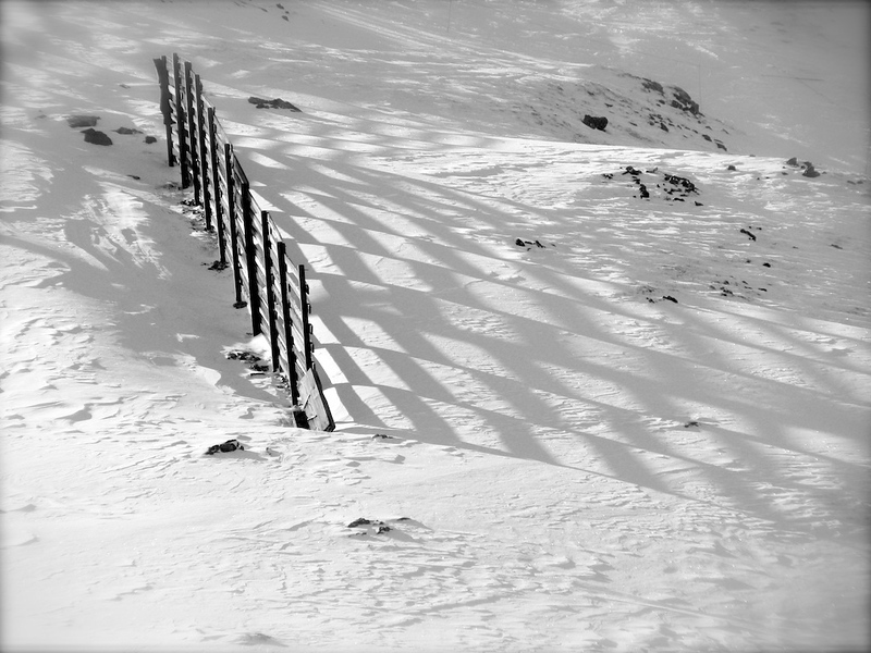 Snowdrift fence at Arapahoe Basin