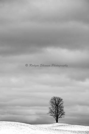 Tree, I