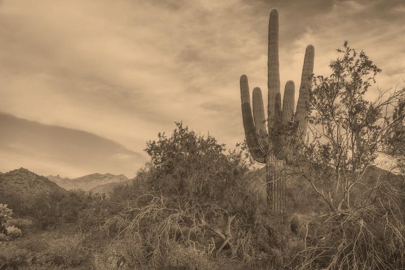 McDowell Mountain, Scottsdale, AZ