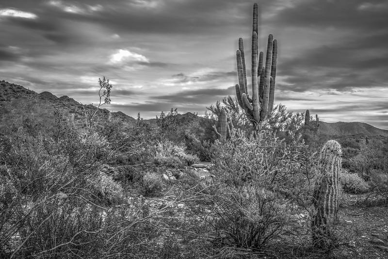 The Sonoran Desert,  Scottsdale, AZ