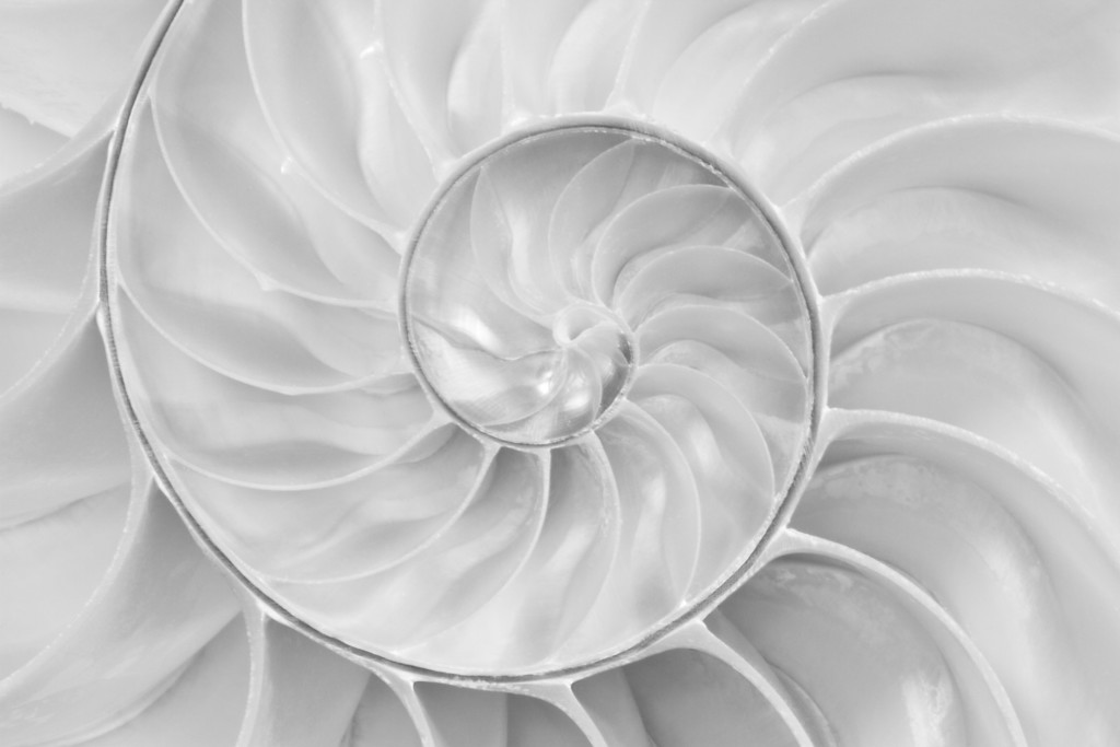 Detail of the inside of a Nautilus Shell.