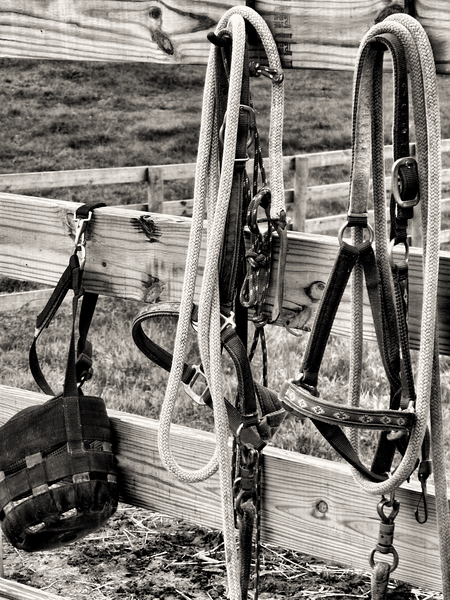 Halters on fence