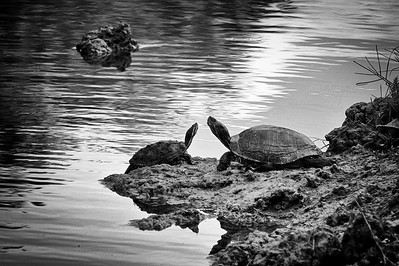 The Long Turtle Goodbye in bw D90
