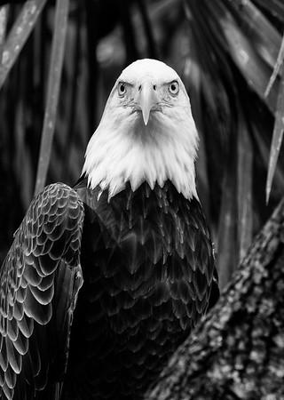 Brevard Zoo bw 11-19-15