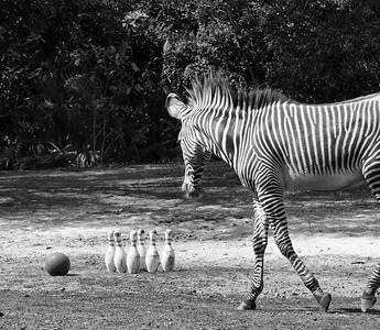 Zoo Miami bw 2-20-17