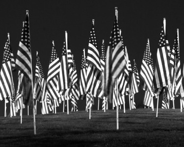 B&W American Flags