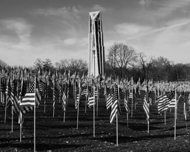 Veterans Day - Naperville, Illinois - Healing Fields - 2009